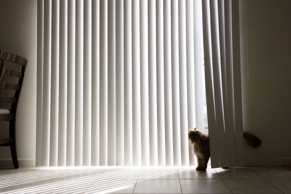 Vertical conservatory blinds with a cat looking out of the window